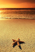 Sunset sea star — Stock Photo