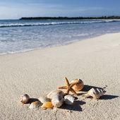 Shells square — Stock Photo