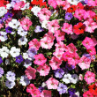 Stock Photo: Flowers square