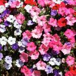Flowers square — Stock Photo