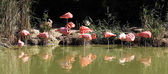 Panoramic flamingo — Stock Photo