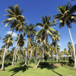 Palm tree land — Stockfoto