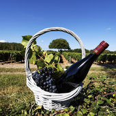 Red wine spirit — Stock Photo