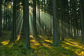 Forest — Stockfoto