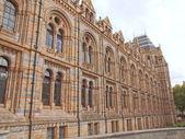 Natural History Museum, London, UK — Stock Photo