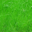 Grass meadow background - 图库照片