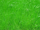 Grass meadow background — Stock Photo
