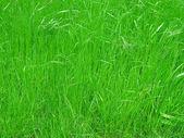 Gras wiese hintergrund — Stockfoto