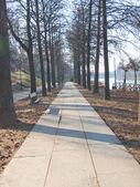 Path among trees — Stock Photo
