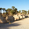 Alley of Sphinxes, Luxor — Stock Photo