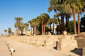 Alley of Sphinxes, Luxor — 图库照片