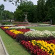 Flowers in City park in centre of Riga — Stock Photo #9877677