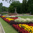 Flowers in City park in centre of Riga - Stock Photo
