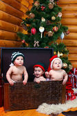 Three babies in xmas hats inside large chest — Stock fotografie
