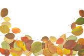 Beyaz bir arka plana dayanır sonbahar yaprakları — Stok fotoğraf