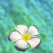 White flower in a swimming pool — Stock Photo