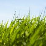 Green grass — Stock Photo #10709757