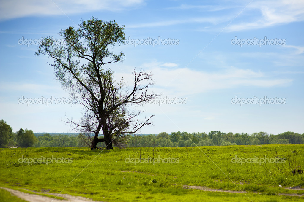 Tree on green field,  blue sky and clouds — Stock Photo #10709753