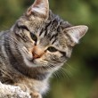 Close-up portrait of domestic cat over natural background — Stok Fotoğraf #7990568
