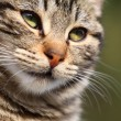 Close-up portrait of domestic cat over natural background - Стоковая фотография