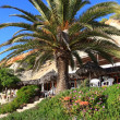 Foto de Stock  : Big Green Palm in Ibizbeach, Balearic Island, Spain