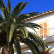Stock Photo: Balearic arquitecture in Ibiza. Green palm over white building.