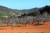 Red cultivated field in Ibiza, Balearic Island, Spain — Stock Photo