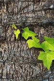 Szczegóły tułowia Dłoń drzewo tekstura tło wzór. — Zdjęcie stockowe