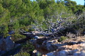 Vegetación dunar típico sobre fondo natural — Foto de Stock