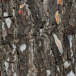 Tree bark texture natural background — Stockfoto