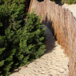 Sandy path cut through grass that leads to beach — Stock Photo #8520463
