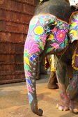 象。インド、ジャイプール、ラージャス ターン州の状態. — ストック写真