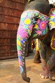 Elefante. India, jaipur, estado de rajasthan. — Foto de Stock