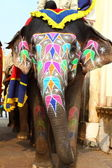 Elephant. India, Jaipur, state of Rajasthan. — ストック写真