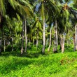 Green Palm Forest in Colombian Island.HDR image — Stock Photo