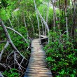 Mangrove forest in Colombia. HDR image — Stock Photo