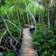 Royalty-Free Stock Photo: Mangrove forest in Colombia. HDR image