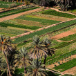 Oasis in Morocco. HDR image. — Stock Photo