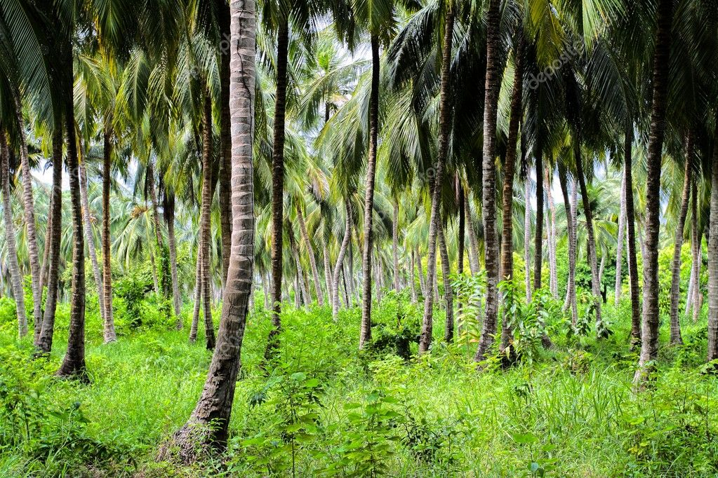 Green Palm Forest in Colombian Island.HDR image — Stock Photo #9924745