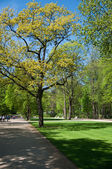 Lazienki Park — Stockfoto