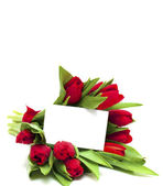 Red tulips and blank card — Stock Photo