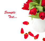 Red tulips and sample text — Stock Photo