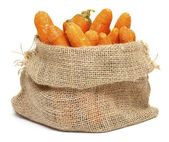 Carrots in a burlap bag — Stock Photo