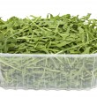 Rucola in plastic box — Stock Photo