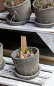 Pots with flower bulbs in flower market — Stockfoto