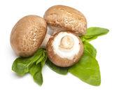Champignon mushroom isolated on white background — Stock Photo