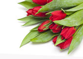 Red tulips with droplets — Stock Photo