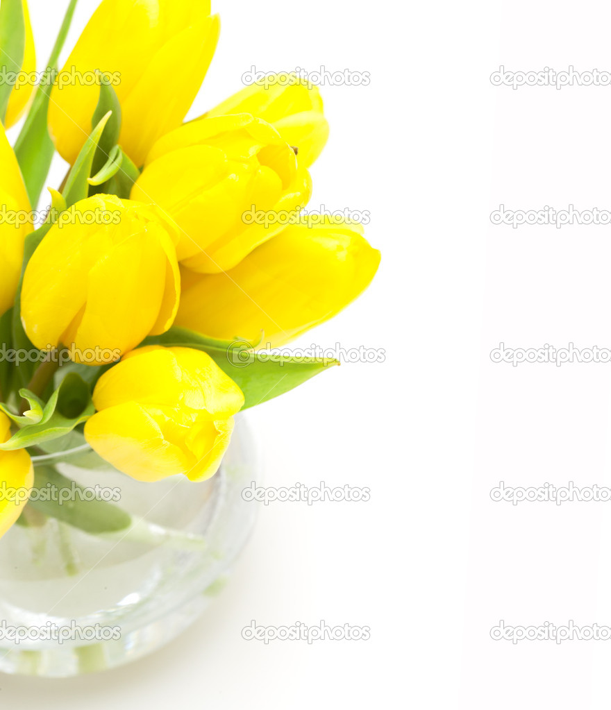 Yellow tulips amd empty space for your text  Stock Photo #9765606