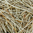 Royalty-Free Stock Photo: Straw texture background, close up
