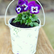 Violet pansies in a romantic bucket in the garden — Stock Photo